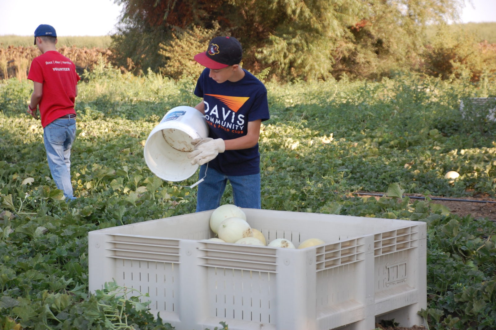 FBF picking melons